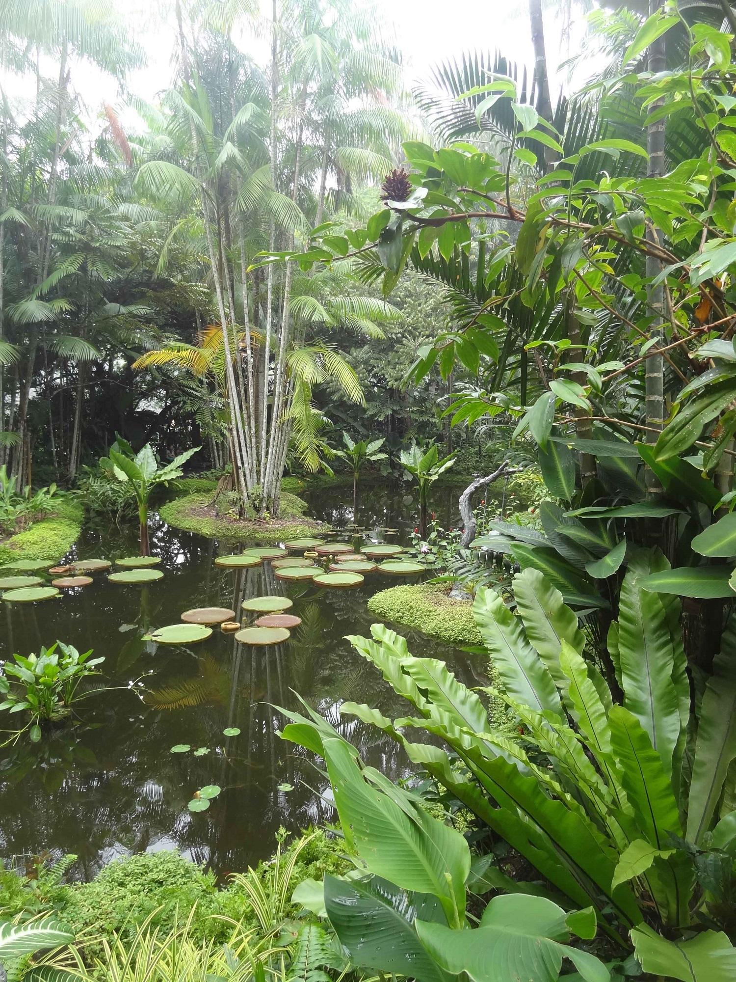 BotanicalSingap 2