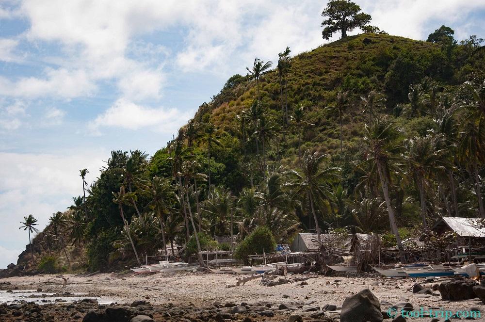 apo beach tree