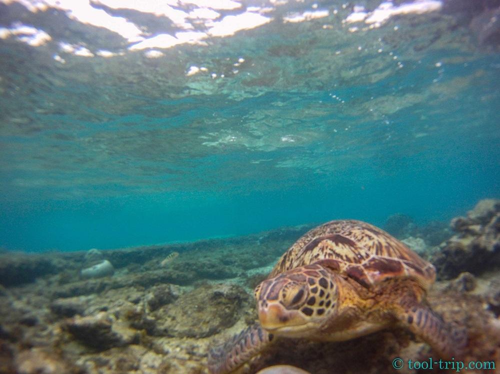Mister turtle