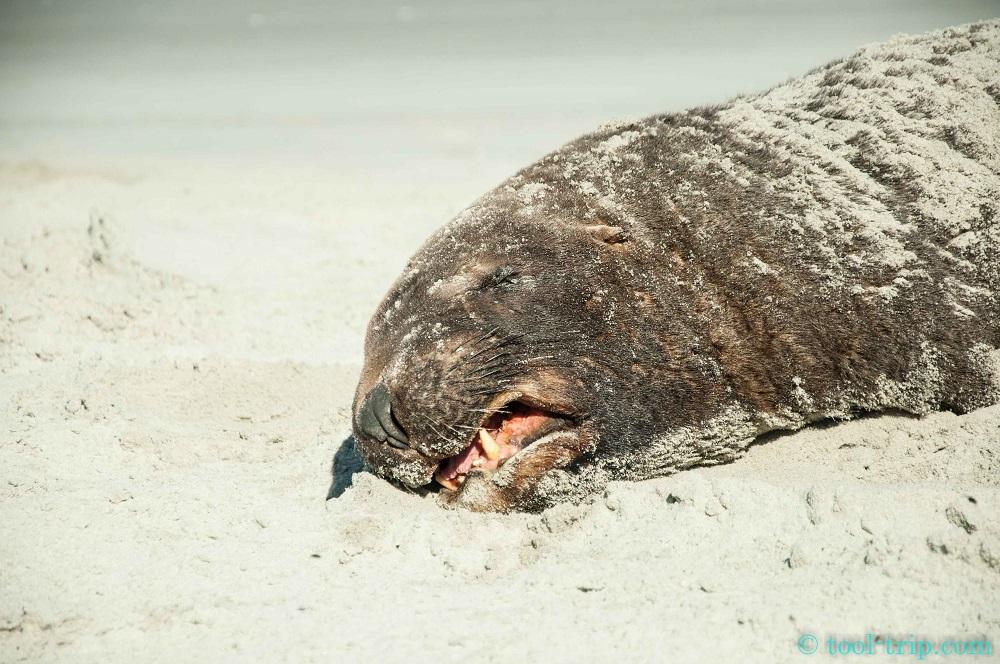 Sealion grumpy