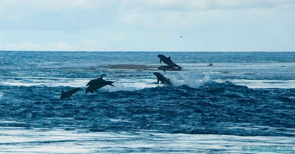 Dauphins saut