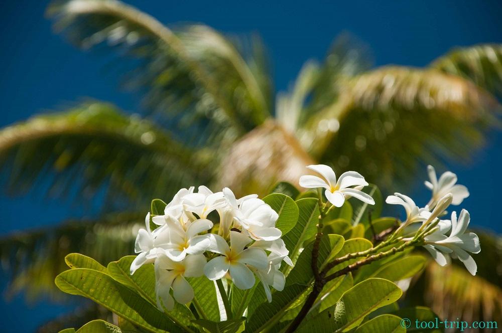 Fleur et palmier
