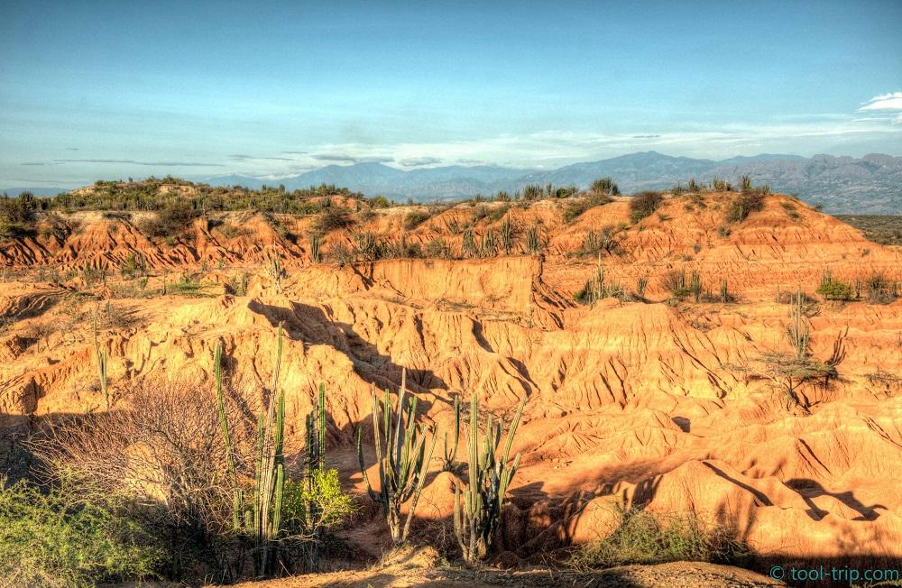 Red desert sunrise hdr cactus