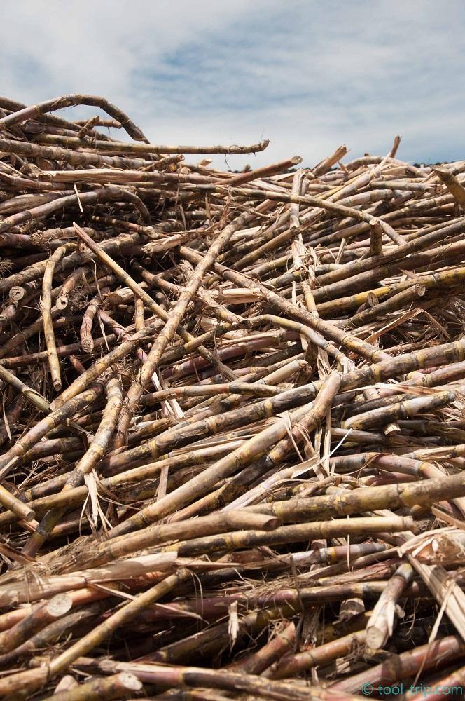 Sugar cane bits