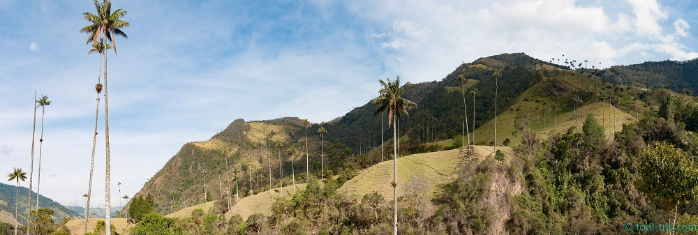 Cocora valley pano