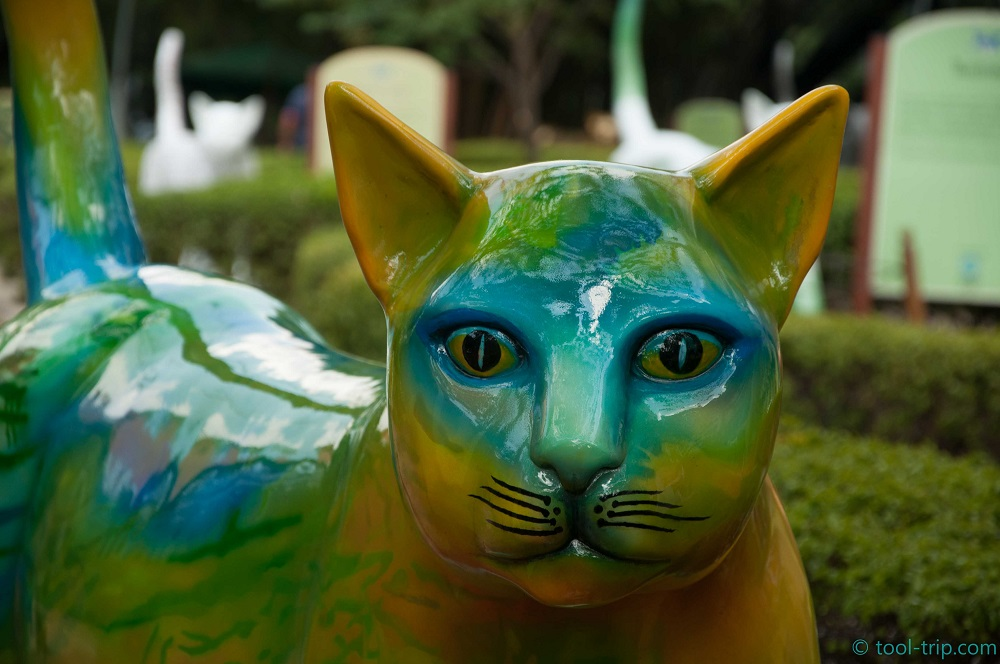Gato yellow