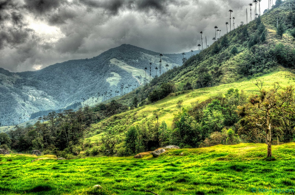 HDR cocora