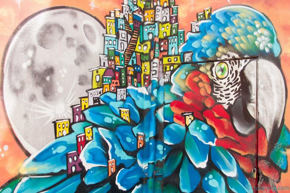 medellin-parrot-graffiti