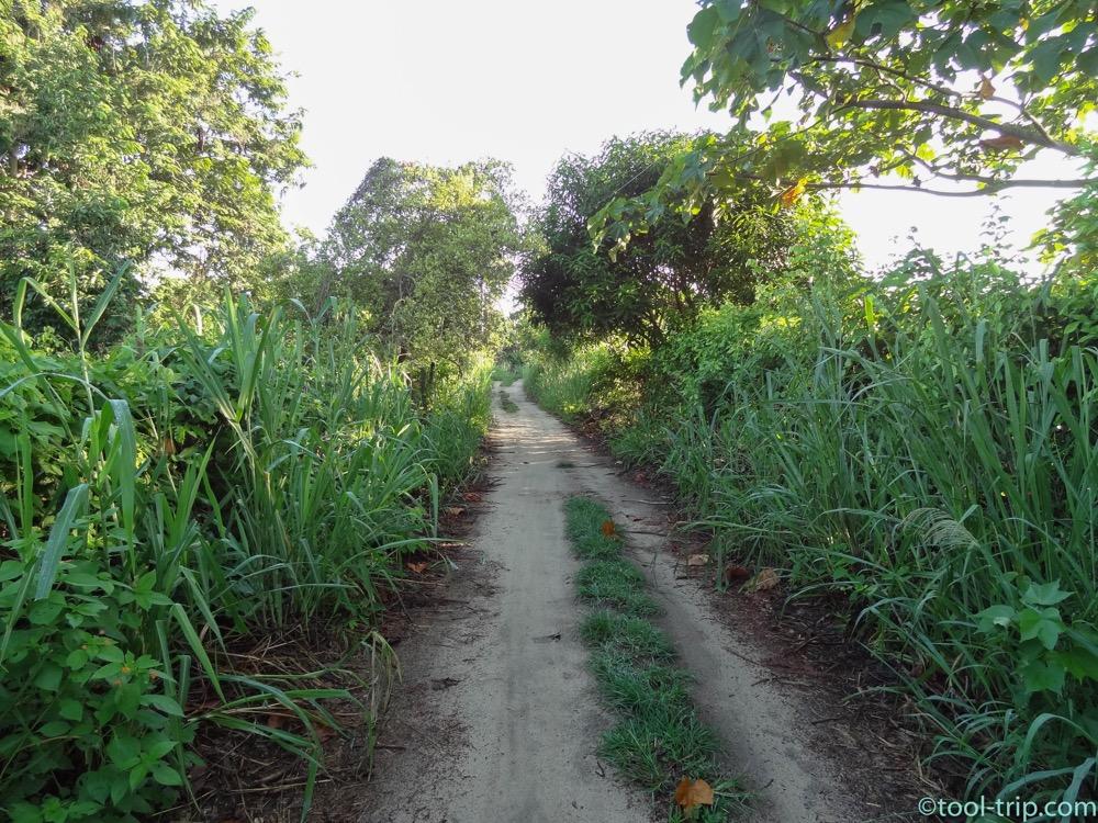palomino-road