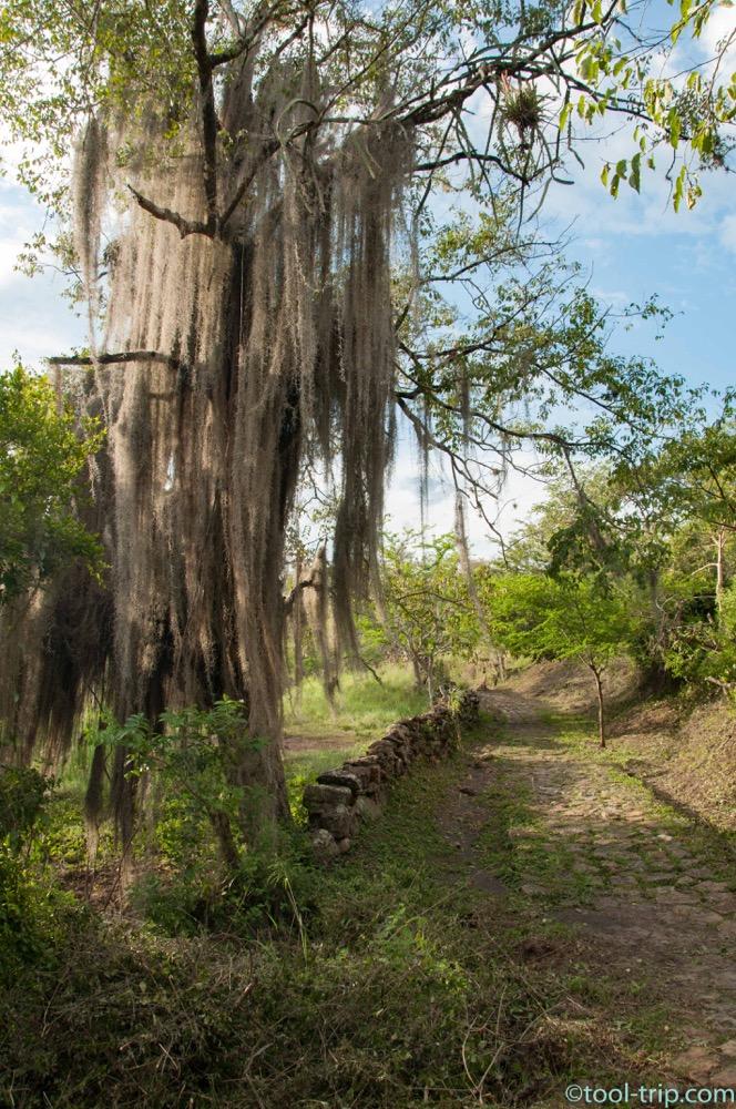 camino-real-tree
