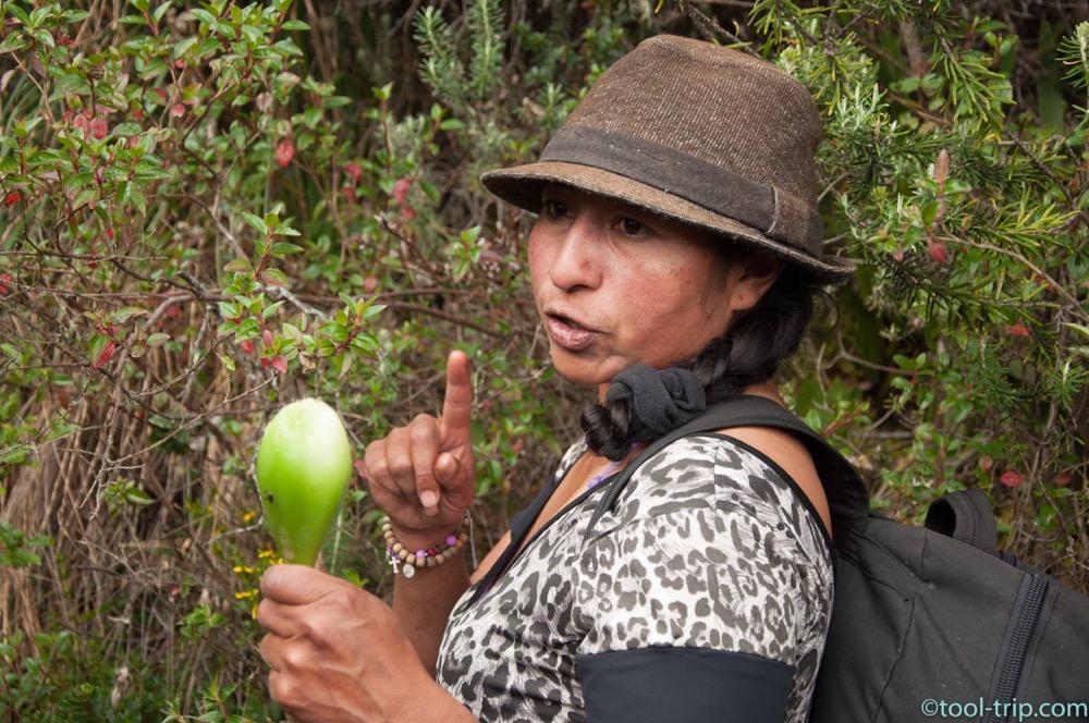 maria-fruit